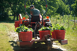 Fruit and Vegetable Farm Agriculture Industry Cleaning Products